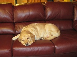 Suwannee River Dog